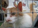 Quelques préjugés sur les chats de refuge