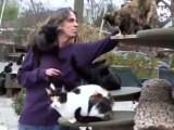 «Happy Cat Sanctuary», une seconde chance pour les chats de Long Island