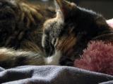 Adoption : 5 raisons d'adopter un chat âgé