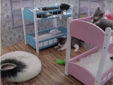 Une émission de télé-réalité avec des chats, inspirée de «L'incroyable famille Kardashian»