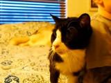 Dexter, adopté à 20 ans, un vieux chat heureux !
