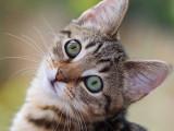 15 raisons pour lesquelles avoir un chat est bon pour la santé