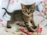 Accueillir et vivre avec un chaton à la maison