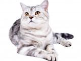 Vivre avec un chat adulte : 8 règles d'or