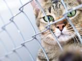 Le trafic de chiens, chats et autres animaux