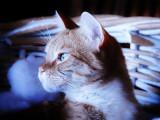 Quel budget prévoir avant d'adopter un chien ou un chat ?