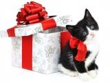 Peut-on offrir un chat ou un chaton à un enfant à Noël ?