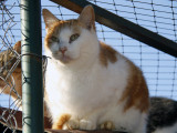 Adopter un chat dans un refuge animalier