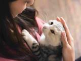 Les démarches et formalités après avoir adopté un chat