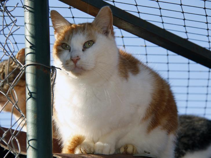 Adopter un chat dans un refuge animalier