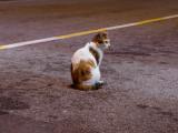 Les abandons de chats : pourquoi ?