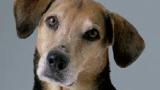 60.000 chiens et chats abandonnés chaque été