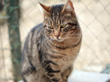 Abandonner son chat : principales causes et risques encourus