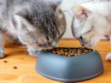 Quel type de nourriture choisir pour son chat ?