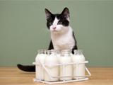 Du lait pour les chats