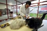chats goûteurs  adoptés par des familles
