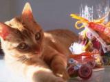Made in Pet: des petites friandises raffinées pour chiens et chats