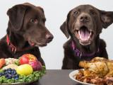 Les chiens et chats peuvent-ils devenir végétariens ?