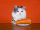 Des Régimes Végétariens pour nos Chats ?