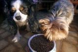 Croquettes animales: Trois fabricants sanctionnés pour restriction de concurrence