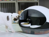 Catspad nourrit votre chat pendant votre absence