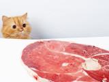 Les avantages du régime BARF pour un chat