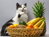 Les fruits toxiques pour les chats