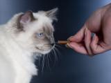 Les friandises pour chat