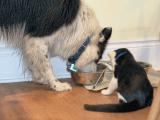 Le régime alimentaire BARF pour les chats