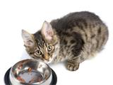 L'alimentation pour un chaton sevré