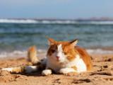 Les Vacances avec votre Chat
