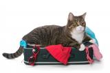86% des Français n'emmènent pas leur chat en vacances