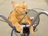 Voyager à véloavec un chat