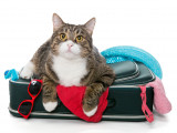Partir en vacances : les solutions de prise en charge des animaux