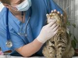 Voyager avec chien & chat. Visite chez le vétérinaire