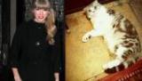 Taylor Swift essaie de transformer son chat Meredith en star d'Internet !