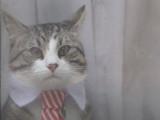 Ambassy Cat, le chat de Julian Assange, est-il un mystérieux messager?