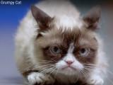 Grumpy cat rencontre Happiness au supermarché