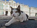 Les chats du musée de l'Ermitage de Saint-Pétersbourg