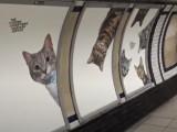 Des chats envahissent une station de métro de Londres
