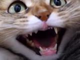 En Suisse, des chats interdits de sortie pour préserver la biodiversité