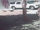 Un petit garçon est secouru d'une attaque de chien par son chat