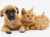 Les Chats et les autres Animaux de Compagnie