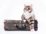Le déménagement et votre chat
