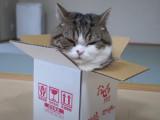 Maru a un penchant compulsif pour les boîtes