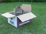 Pourquoi les boîtes bottent-elles tant aux chats?