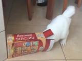 Un chat dingue des boîtes!