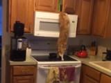 Un chat voleur particulièrement agile !