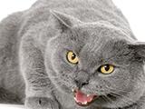 Les causes de l'agressivité chez le chat