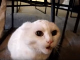 Un chat très en colère